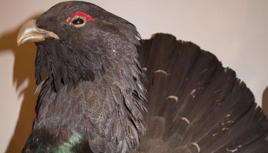 fugl røde øjne
